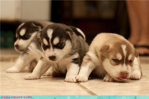 cute dogs puppy - 4018541824