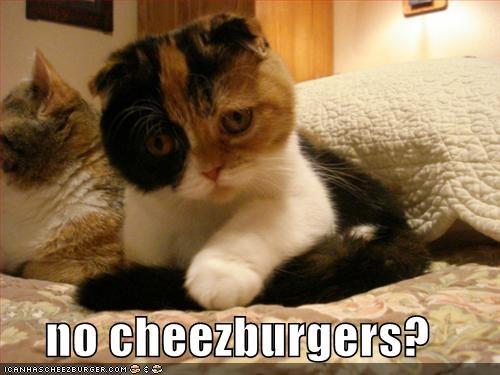 Cheezburger Image 401875200