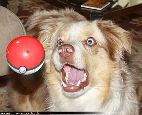 crazy eyes gotta catch em all pokeball Pokémon Theme Song whatbreed - 4018836224