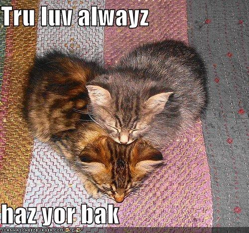 caption,captioned,cat,cute,got your back,Hall of Fame,heart-shaped,kitten,LOLs To Go,true love