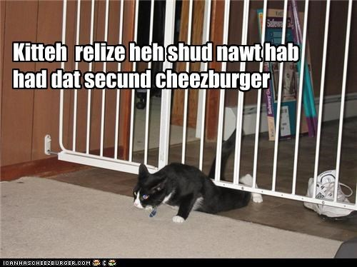 Cheezburger Image 4019734016