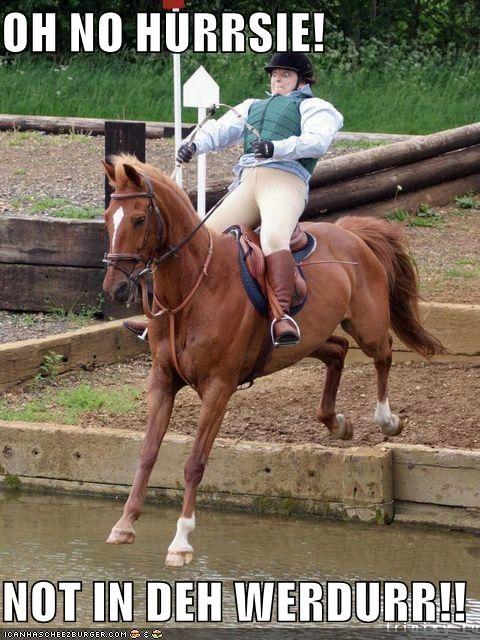 best of week derp horse water - 4020130816