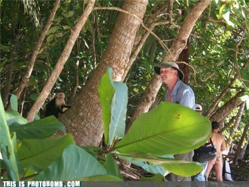 animals Good Times monkey photobomb wildlife - 4020180480