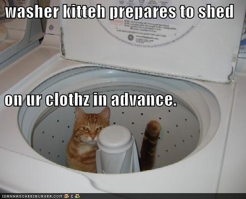 caption captioned cat prepared shedding washer washer kitteh washing machine - 4020429056