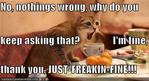 angry caption captioned cat denial fine Hall of Fame nothing screaming wrong yelling - 4020951808