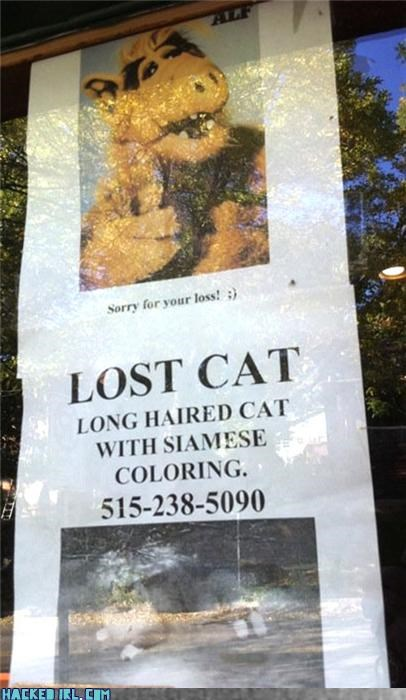 Alf cat lol lost - 4021778432