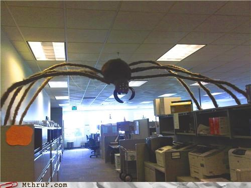 halloween office prank scary spiders