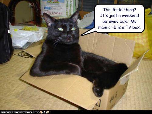 box caption captioned cat crib main this little thing tv box weekend getaway - 4023323136