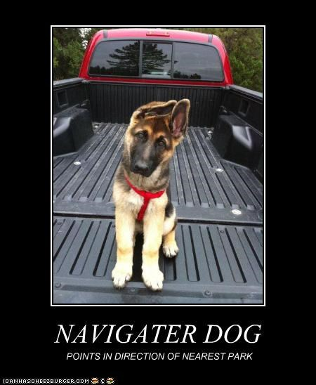 NAVIGATER DOG POINTS IN DIRECTION OF NEAREST PARK