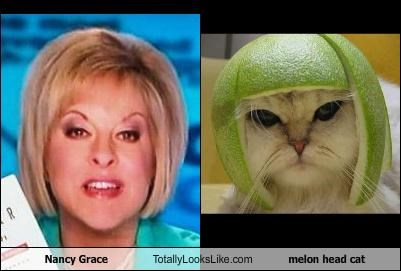 Cats,hair,lolcats,melon head cat,Nancy Grace