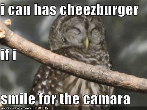 Cheezburger Image 4024684288