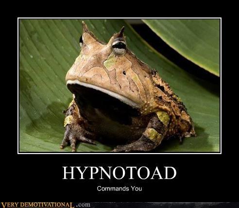 animals hypnotoad Terrifying - 4024876544