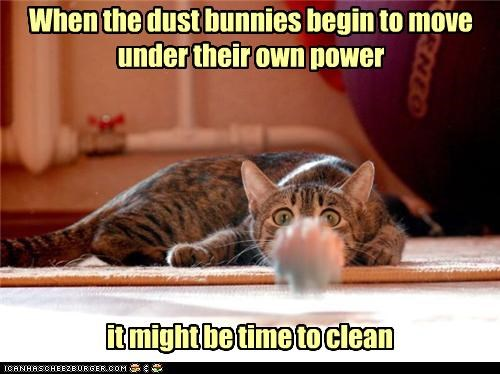 autonomy,caption,captioned,cat,dust bunnies,freaked out,moving,on their own,sign,time to clean