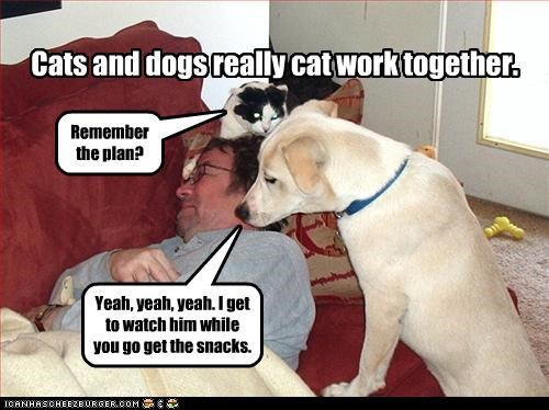 Cats and dogs really cat work together. Remember the plan? Yeah, yeah, yeah. I get to watch him while you go get the snacks.