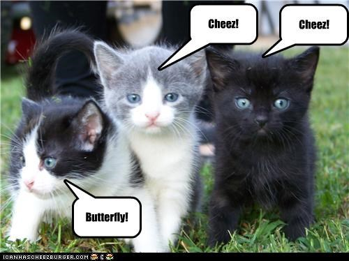 add butterfly caption captioned cheez cute kitten Photo posing say cheese - 4026386688