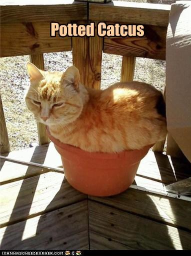 cactus,caption,captioned,cat,catcus,flower pot,Growing,plant,potted,pun