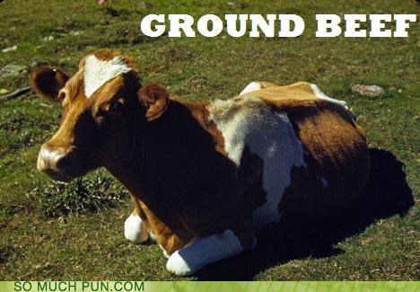 Beef,cow,filet mignon,ground,laying down,veal