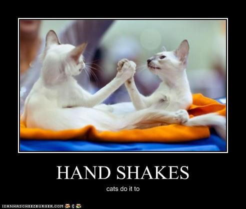 HAND SHAKES cats do it to