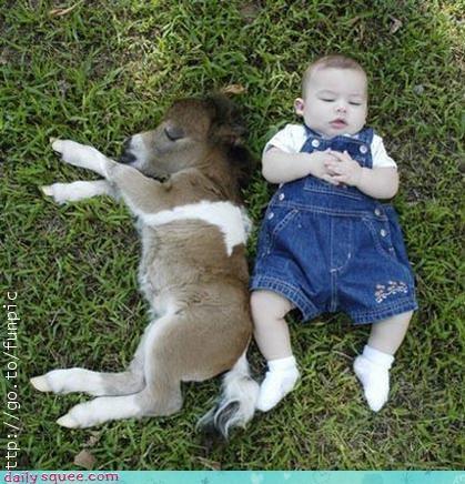 baby,donkey,human