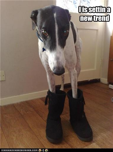 boots cute greyhound new trend - 4027803392