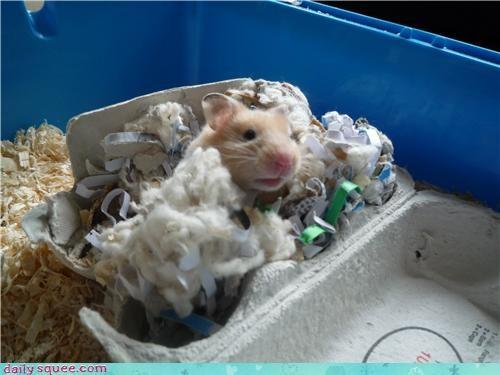 hamster pet user - 4027926784