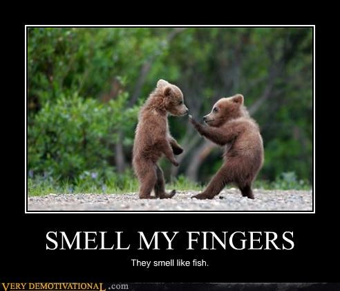 animals bears finger banging fish hilarious mammals - 4028596736