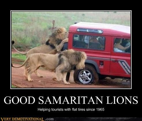 animals,dangerous,helpful,jeeps,lions,Terrifying