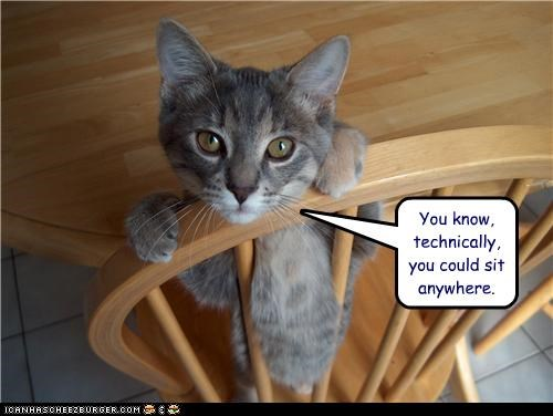 anywhere,caption,captioned,cat,chair,hypothetically,options,other,sitting,suggestion,technically