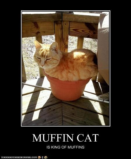 MUFFIN CAT IS KING OF MUFFINS