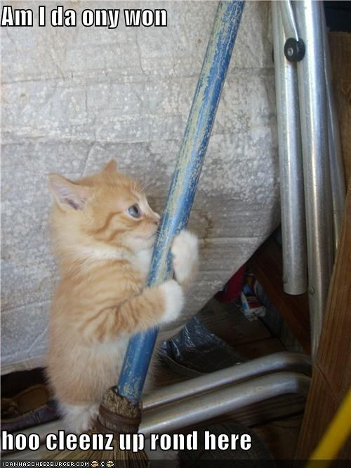 broom caption captioned cleaning cute disappointment disgust kitten only one question upset - 4030477056