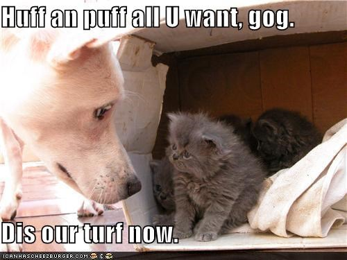 caption,captioned,conquest,dogs,futility,huff,kitten,our turf,ownership,puff,three little pigs
