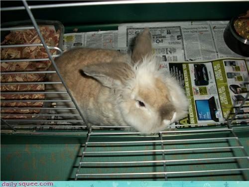 bunny cute hair - 4030669568