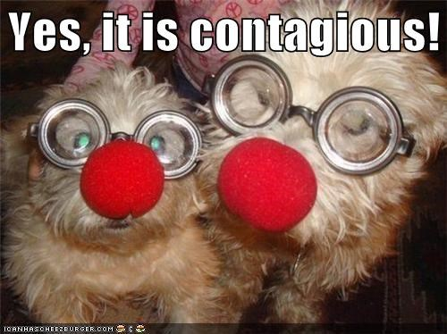 clown,contagious,disease,glasses,Hall of Fame,noses,prognosis,silky terrier,two dogs