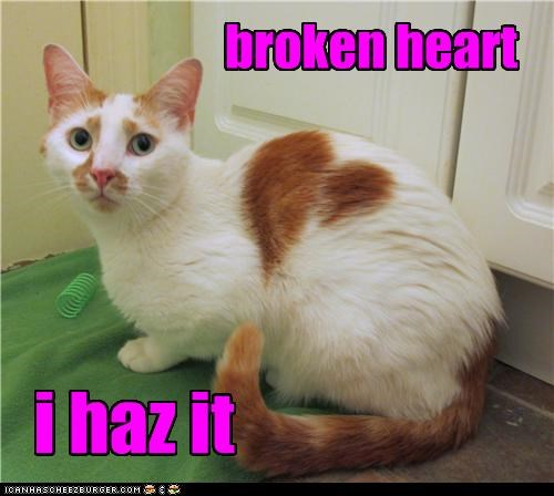 broken broken heart caption captioned cat fur heart i has shape - 4031571712