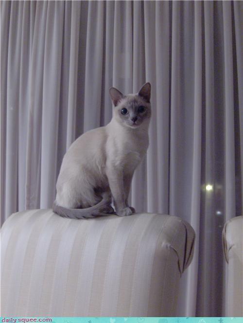 cat cute model - 4031617024