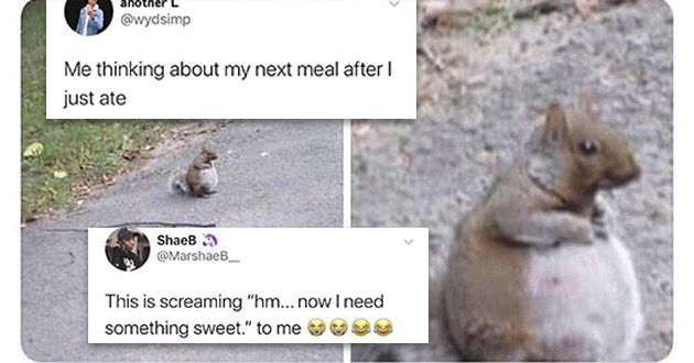 "squirrels memes funny lol cute rodents animals adorable aww animals meme squirrel | another @wydsimp thinking about my next meal after just ate ShaeB MarshaeB_ This is screaming ""hm now need something sweet chubby chonky squirrel sitting on the road"