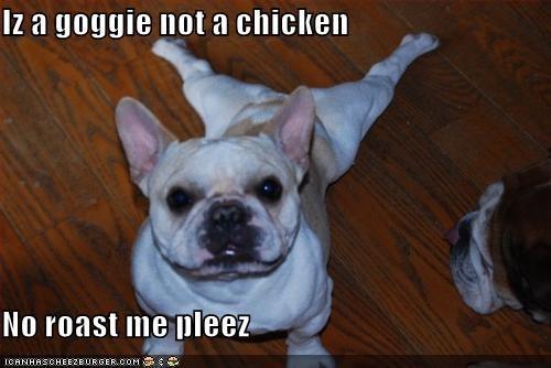 Cheezburger Image 4032035840