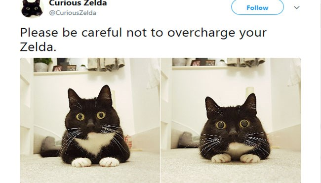 zelda the curious cat on twitter