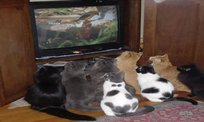 a funny list of cats in front of the tv