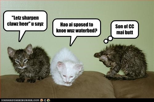 bad idea caption captioned cat claws cute kitten Sad sharpening water bed wet whining - 4032598272