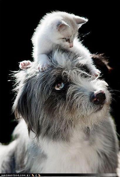friendship,kittehs r owr friends,kitten,lookout,mixed breed,protection,spaniel,thanks