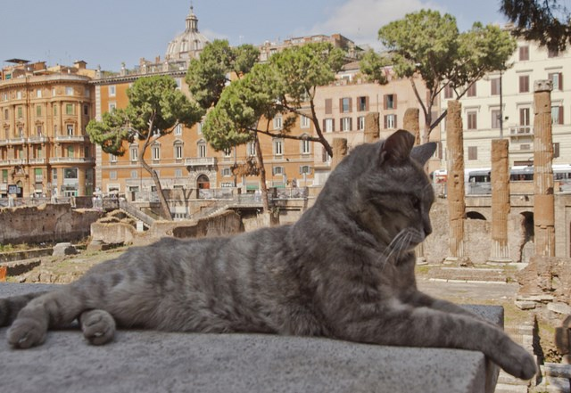 the cats living in the historical square in Rome