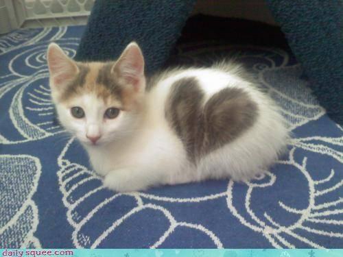 heart,kitten,spot