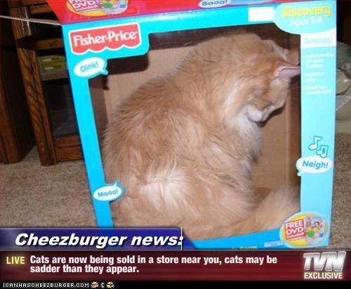 Cheezburger Image 4033837568