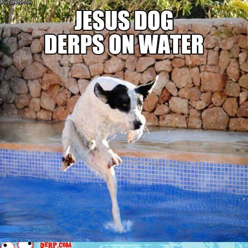 cold critters dogs jesus religion walks on water