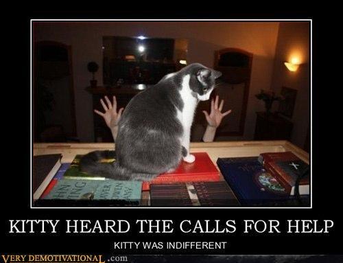 animals Cats computer cruel help Terrifying - 4034648064
