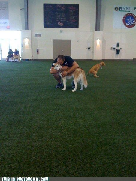 Animal Bomb animals dog show dogs photobomb pooping - 4034706688