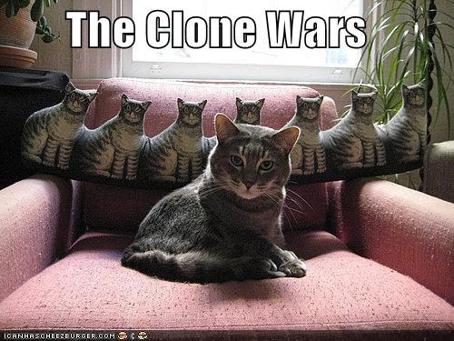 caption captioned cat clone wars cloning decoration door stop pun star wars war - 4034792192