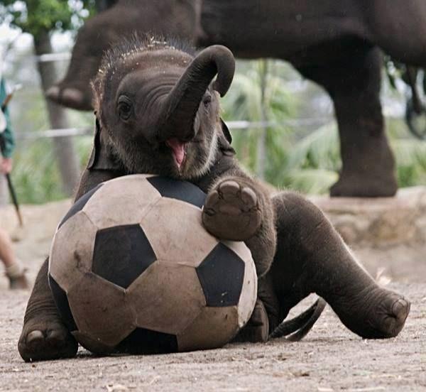 the cutest animal photos