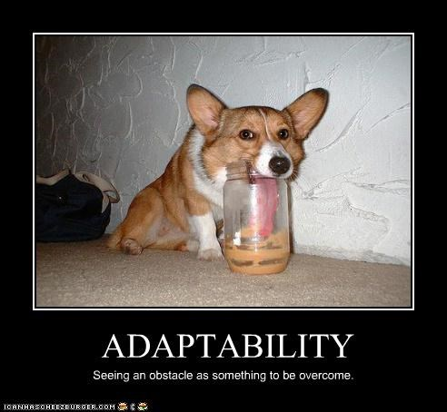 adaptability,corgi,cute,licking,long,obstacle,overcoming,peanut butter,tongue